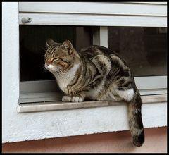 Gatto Félix......a sweet cat:-)))