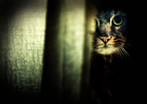 Gatto fuori dalla finestra