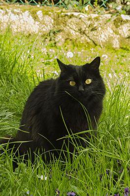 Gatto in erba. Cat in grass