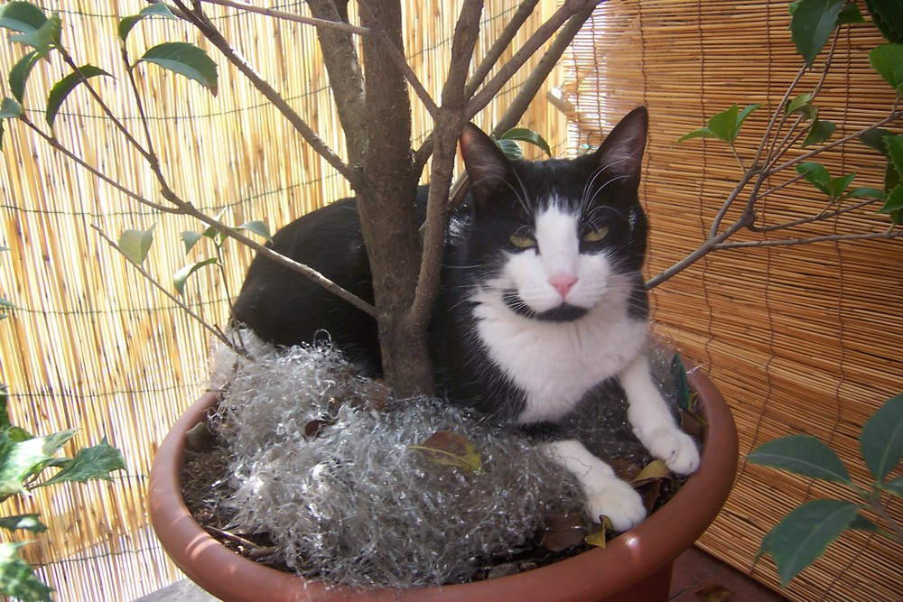 Gatto in relax