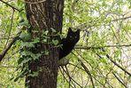 gatto nero...