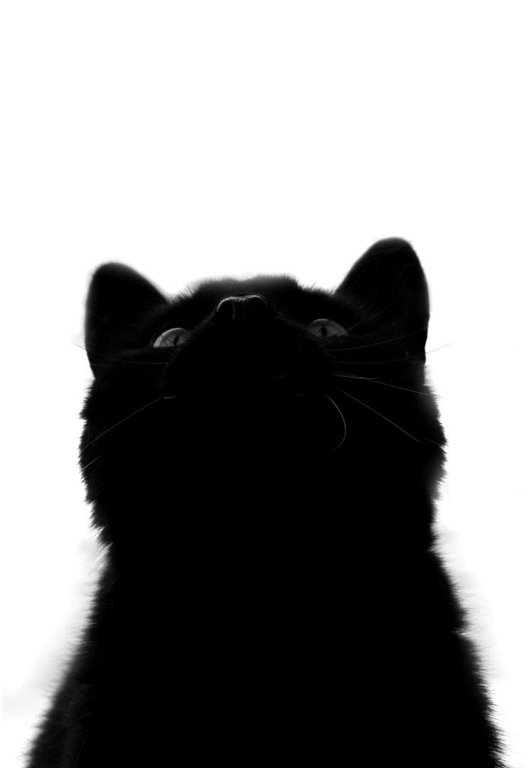 Gatto nero - hochnäsig?