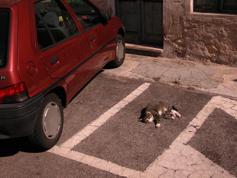 gatto parcheggiato