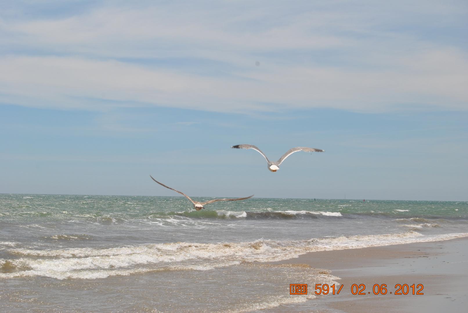 Gaviotas volando en la playa de El Portil