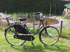 Gazelle Damen Hollandrad bei bei uns im Greenbike-Shop