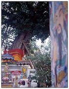 Gebet unter einem Banyanbaum - Wat Pho, Bangkok