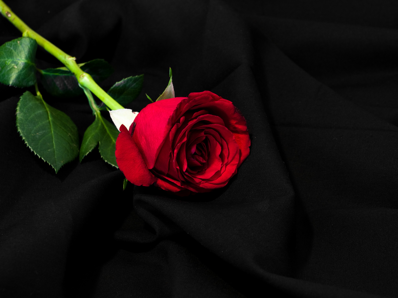 Gebette Rose
