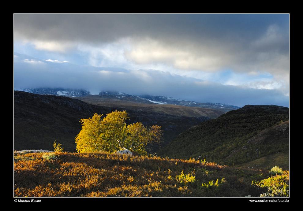 Gebirgslandschaft im Leirdalen • Oppland, Norwegen (88-21994)