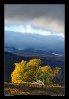 Gebirgslandschaft im Leirdalen • Oppland, Norwegen (88-21995)