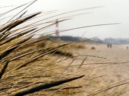 gebogen vom Wind