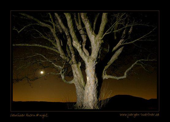 Gebrüder Ahorn @ night