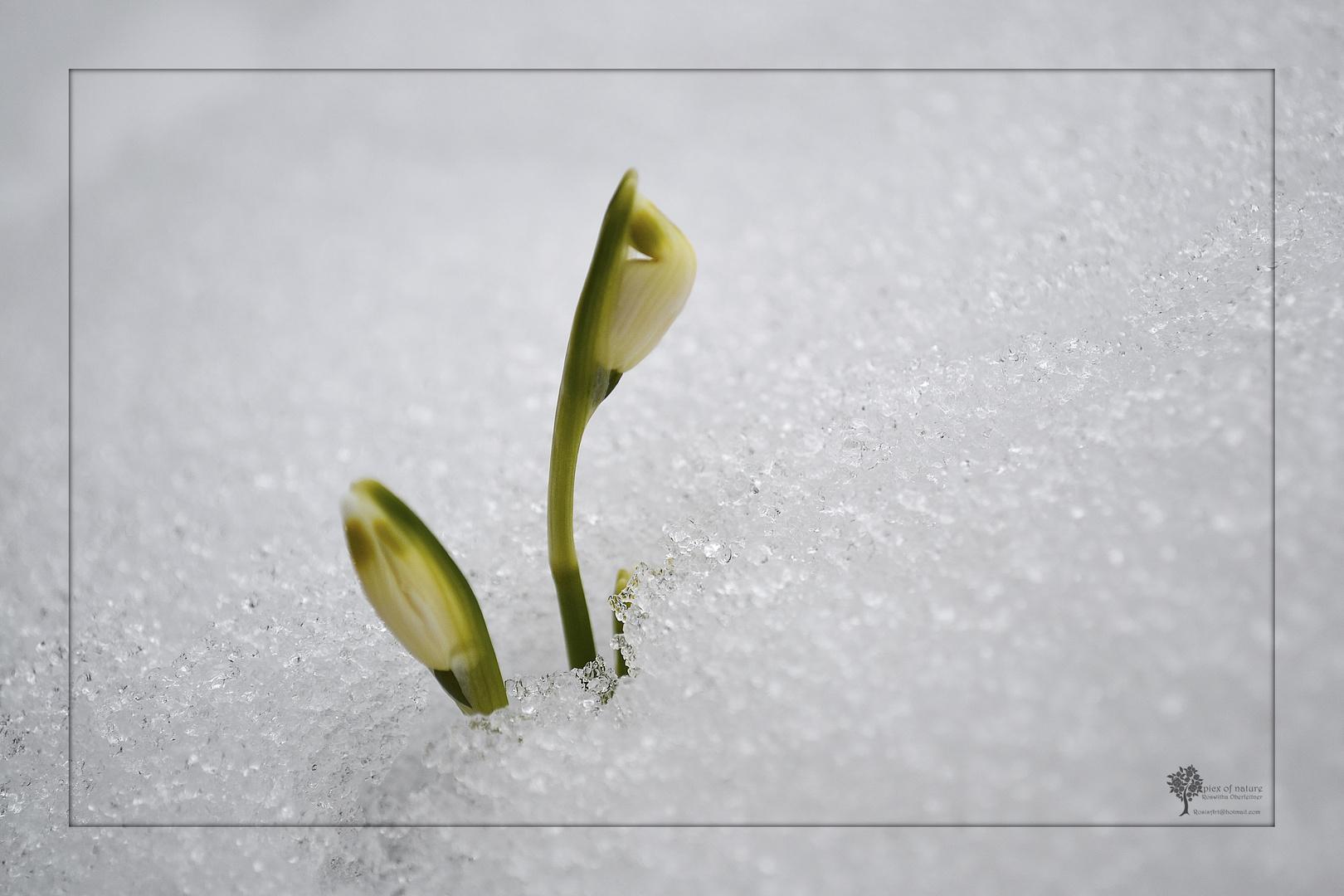 *Geburt des Frühlings*