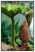 geburt, oder wie lautet der name dieser pflanze?