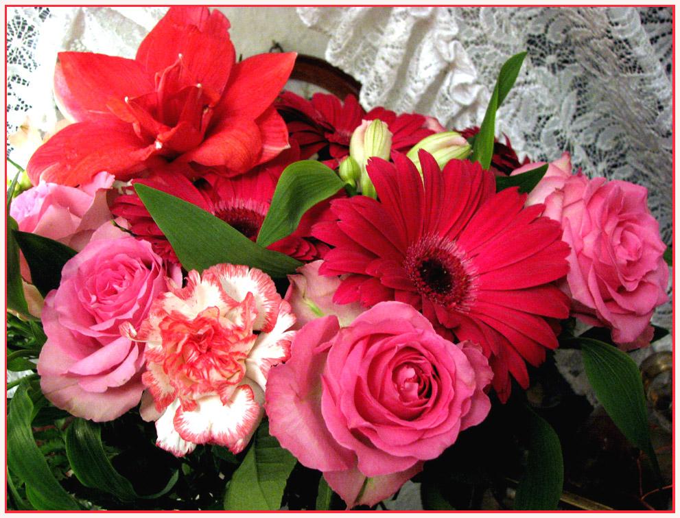 geburtstagsblumen f r mich foto bild pflanzen pilze flechten bl ten kleinpflanzen. Black Bedroom Furniture Sets. Home Design Ideas