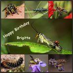 Geburtstagsgrüße für BRIGITTE