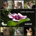 Geburtstagsgrüße für Sabine