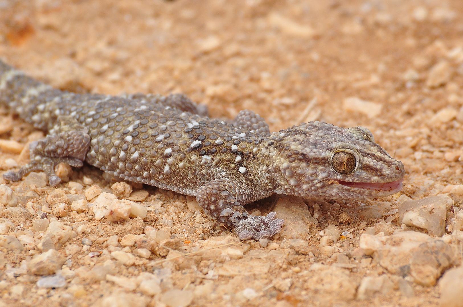 Gecko an unserer Mess-Station