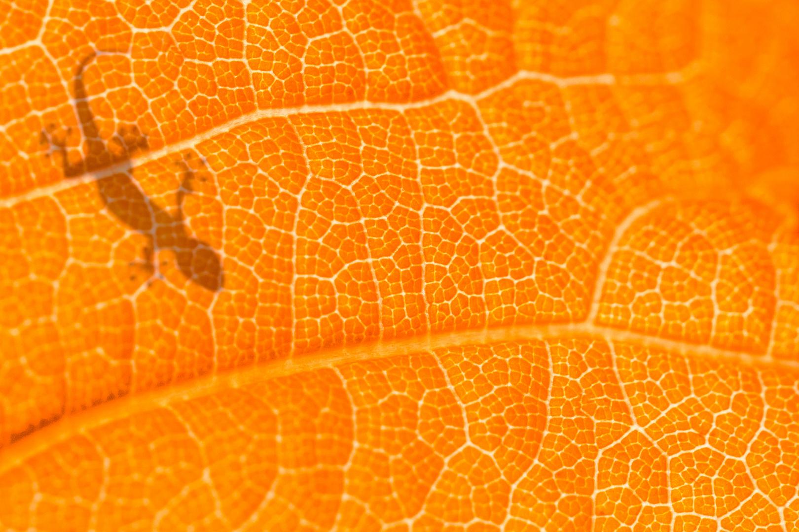 Gecko auf Blatt