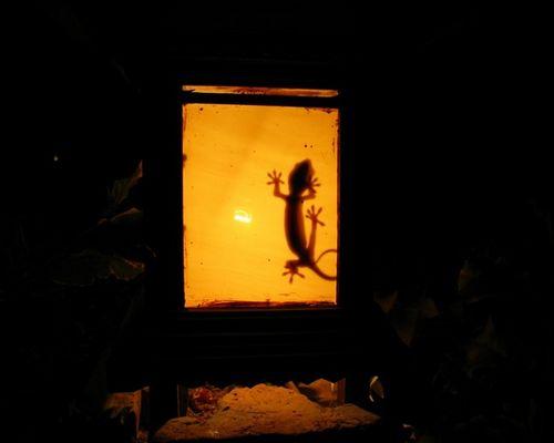 Gecko in Gartenlampe