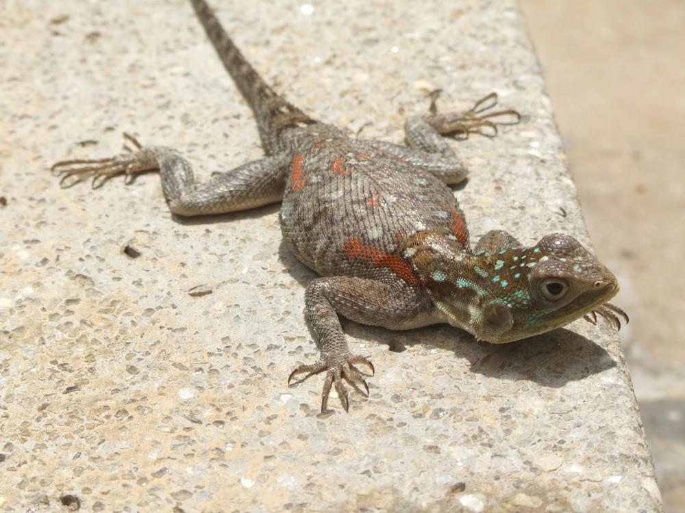 Gecko Kenya