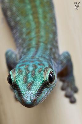 Gecko - nochmal