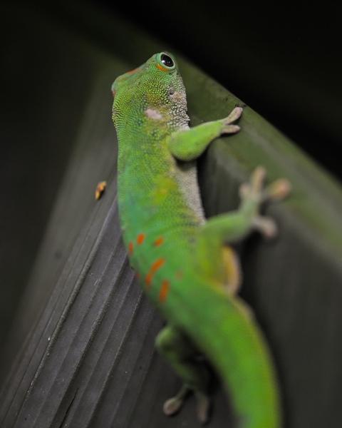Gecko Spy
