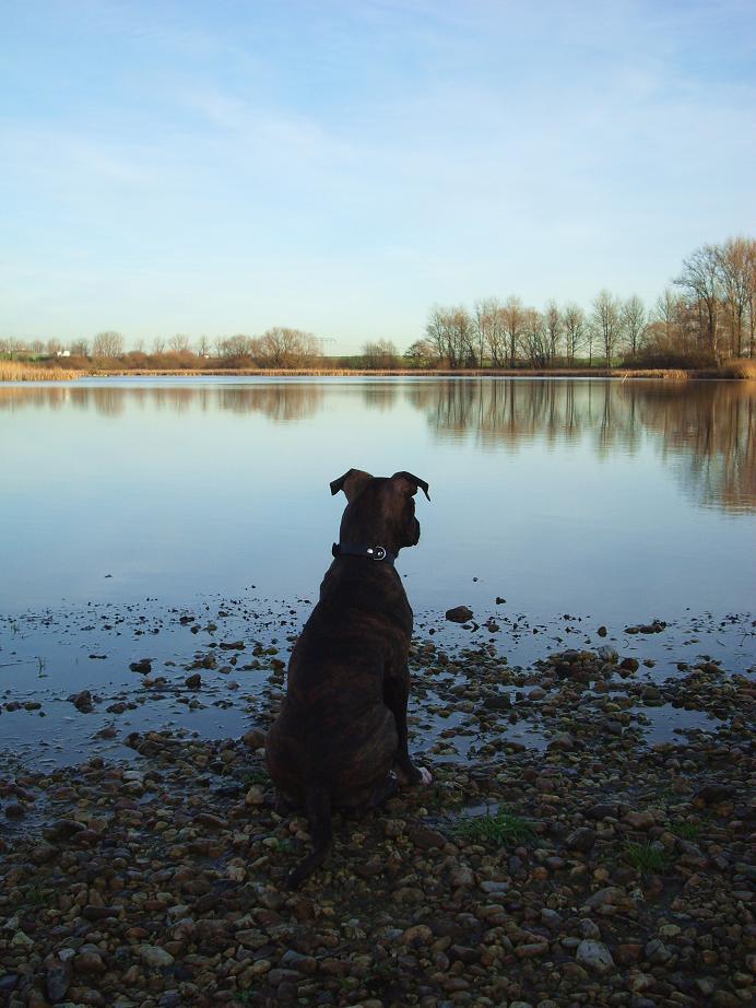 Gedanken eines Hundes.....