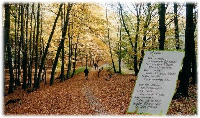 Gedanken im Herbst
