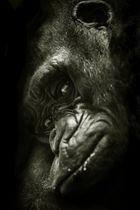 Gedankenverloren im Zooknast