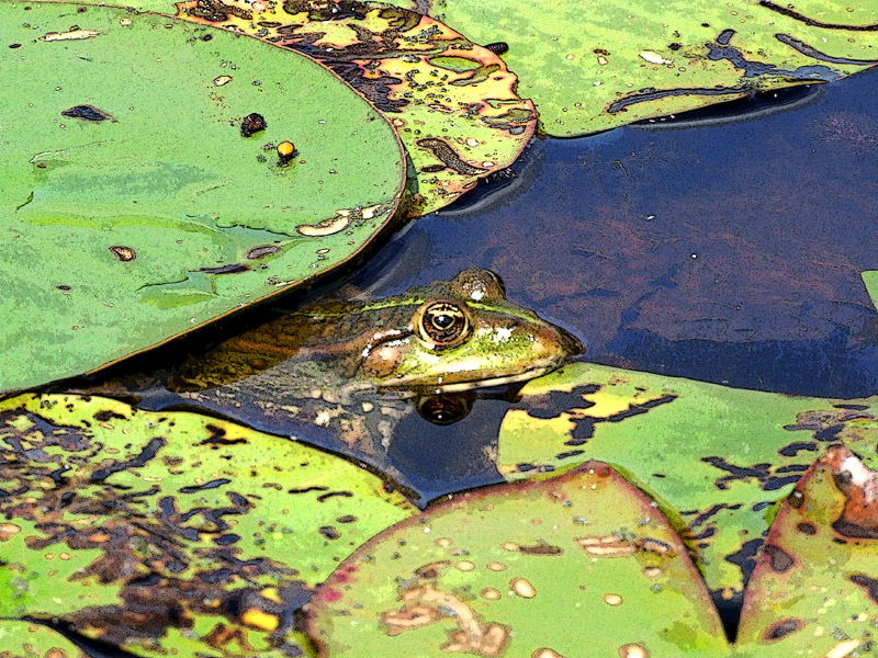 geduldiger frosch