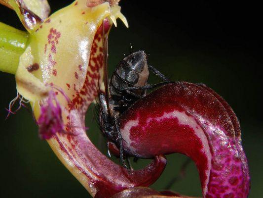 gefährliche Orchids gibt es auch ;-))
