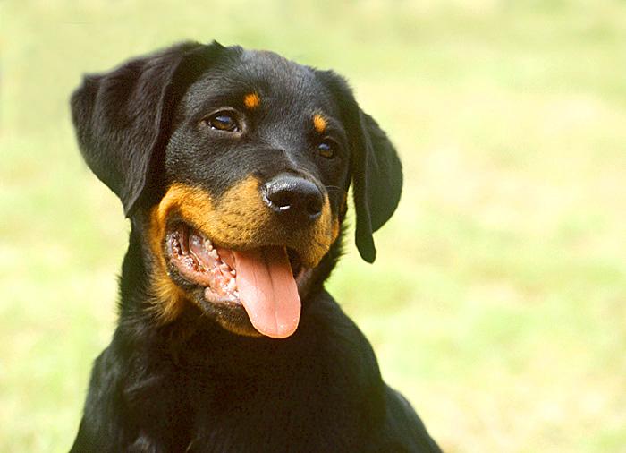 Gefährlicher Hund? - Versuch Nr. 2