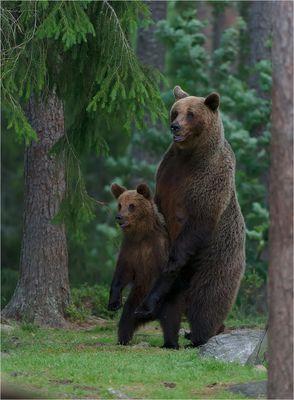 Gefahr….. andere Bären im Anmarsch