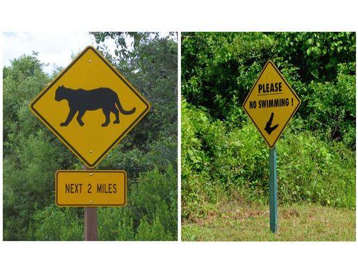 Gefahr in den Everglades