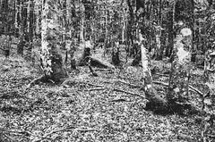 Gefahren im Sommerwald