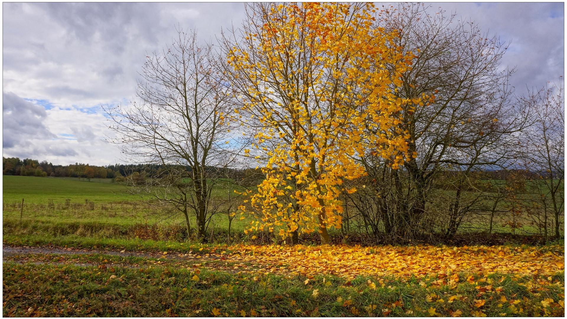 gefallene Blätter (hojas caídas)