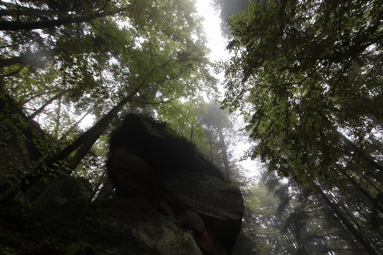 Gefangen im Düsterwald