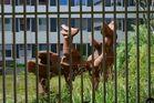 Gefangene Steintiere