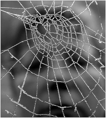 Gefangen...im Netz der Eisspinne