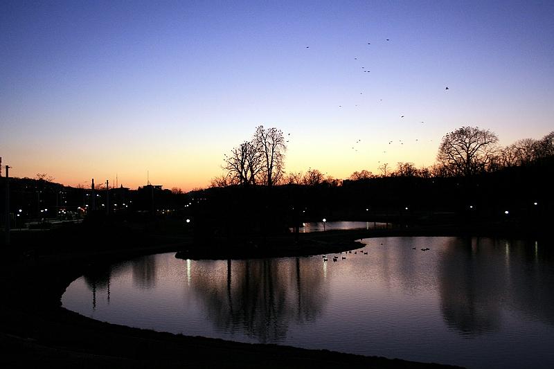 Geflatters am Gebäums zum Sonnenuntergang