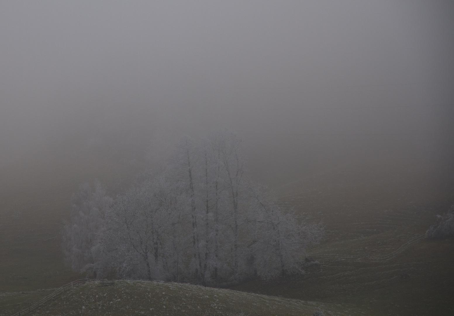 Gefrierender Nebel 1