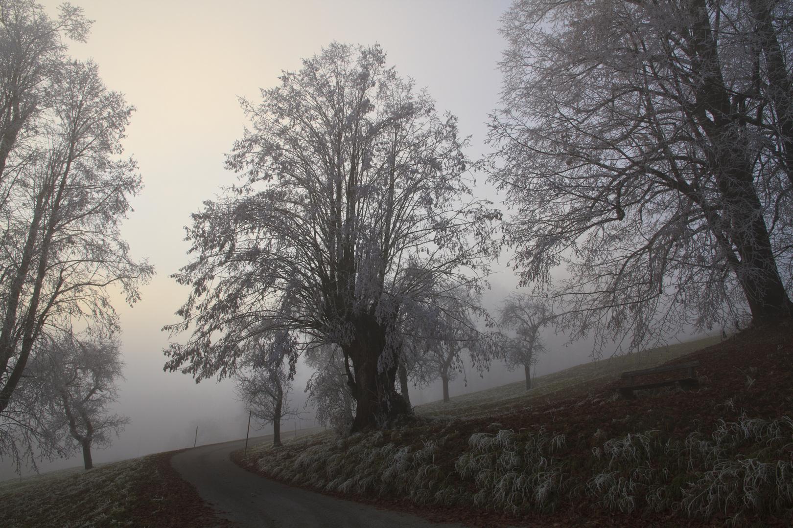 Gefrierender Nebel 3