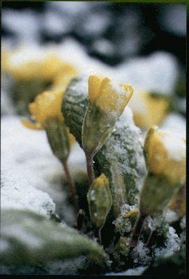 Gefrorene Blumen