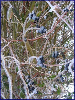 gefrorene früchte...