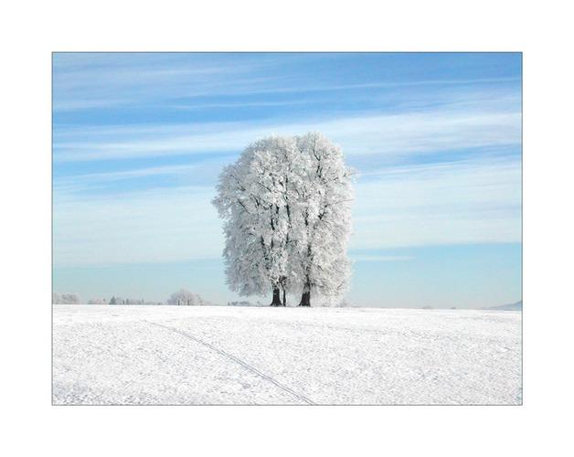 Gefrorener Baum