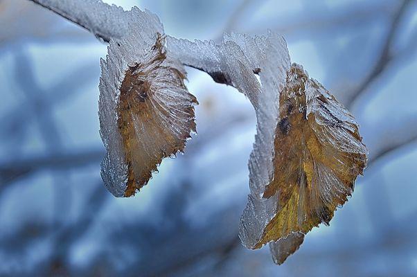 gefrorener Reif