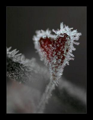Gefrorenes Herz