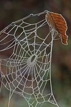 Gefrorenes Netz