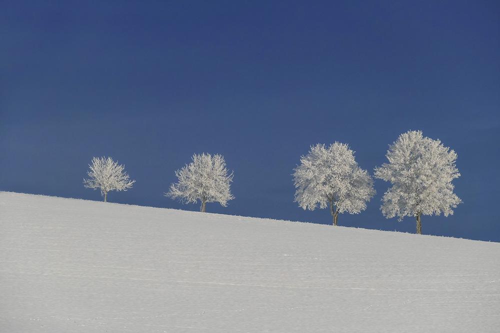 gefrostete Bäume
