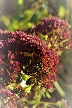 gefunden in Herbst Gärten